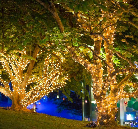 amazing fairy lighting in trees