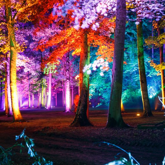 Enchanted Forest party planned - mood lighting