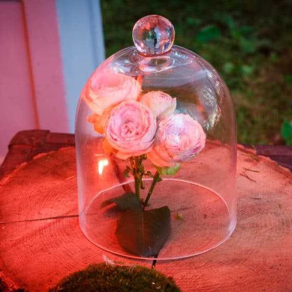 Enchanted Forest party planned - roses