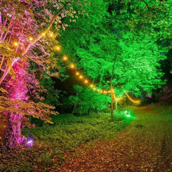 Trees lit and way-finding lighting